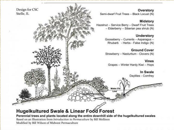 Plant Guild R&D
