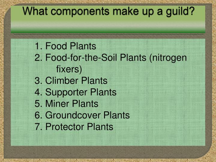 What components make up a guild?