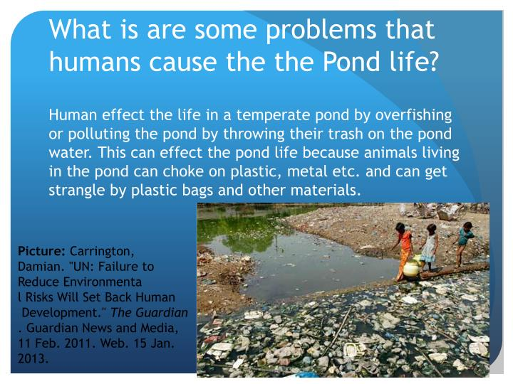 Ppt temperate ponds powerpoint presentation id 1561467 for Pond problems