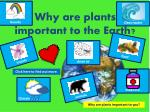 why are plants important to the earth