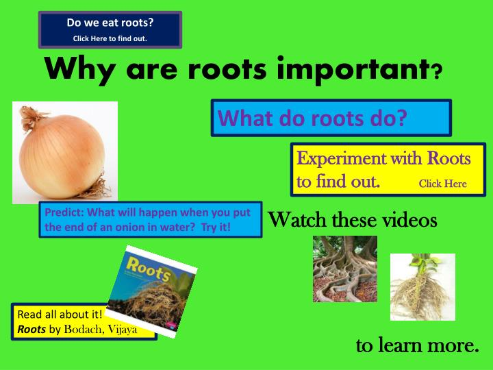 Do we eat roots?