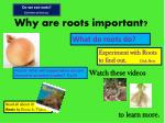 why are roots important