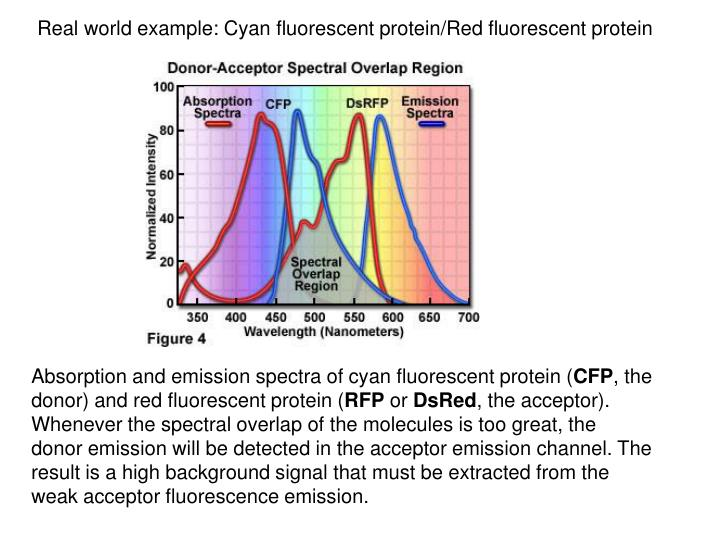 Real world example: Cyan fluorescent protein/Red fluorescent protein