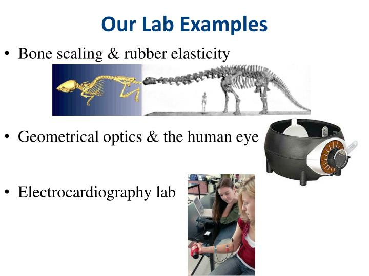 Our Lab Examples