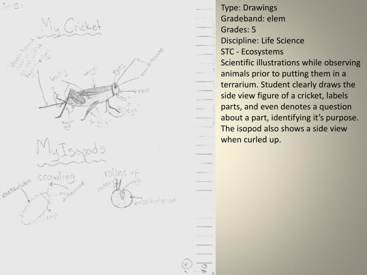 Type: Drawings