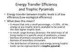 energy transfer efficiency and trophic pyramids