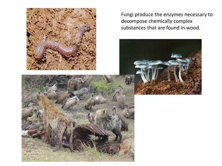 Fungi produce the enzymes necessary to decompose chemically complex substances that are found in wood.