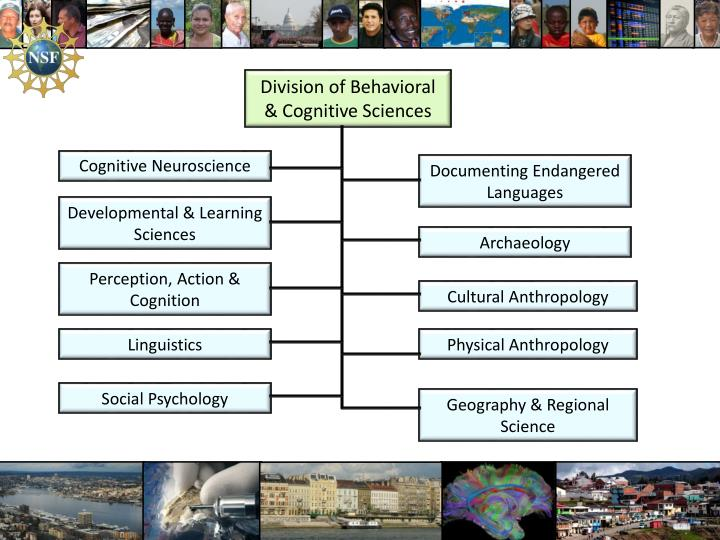 Division of Behavioral