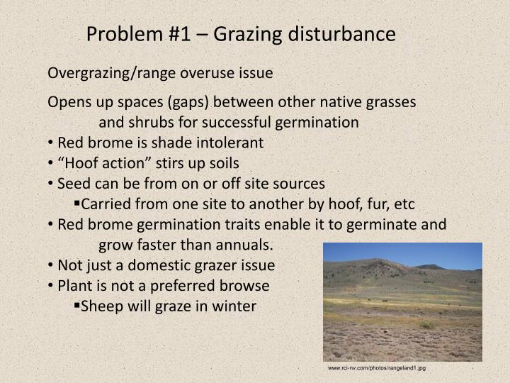 Problem #1 – Grazing disturbance