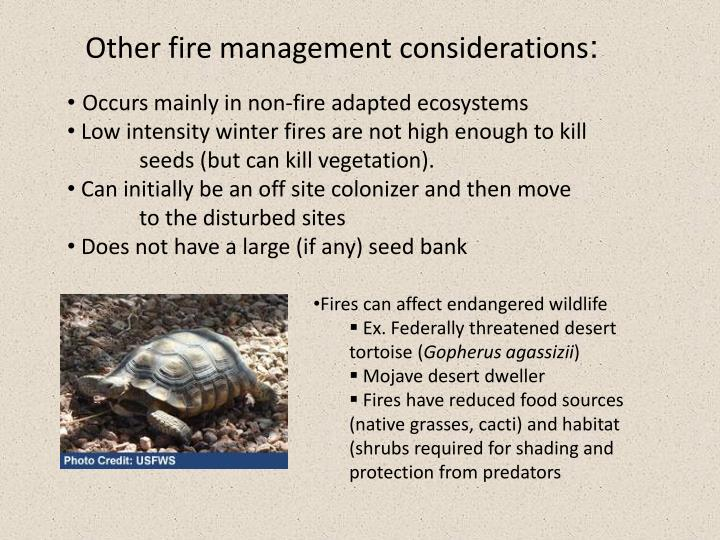 Other fire management considerations