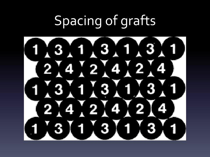 Spacing of grafts