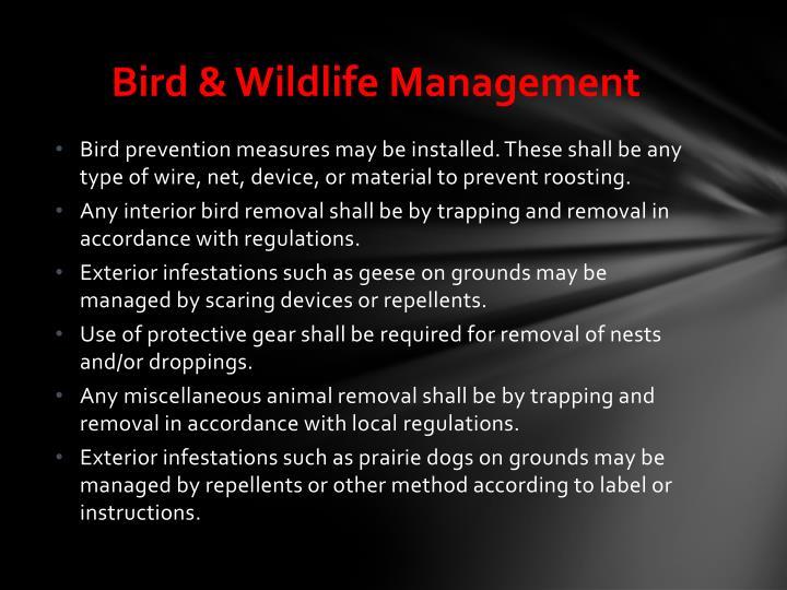 Bird & Wildlife Management