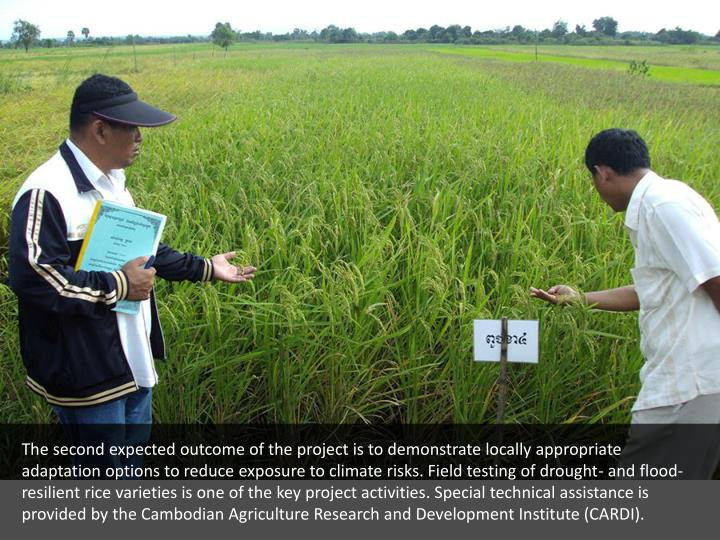 The second expected outcome of the project is to demonstrate locally appropriate adaptation options to reduce exposure to climate risks. Field testing of drought- and flood-resilient rice varieties is one of the key project activities. Special technical assistance is provided by the Cambodian Agriculture Research and Development Institute (CARDI).