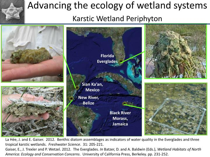 Advancing the ecology of wetland systems