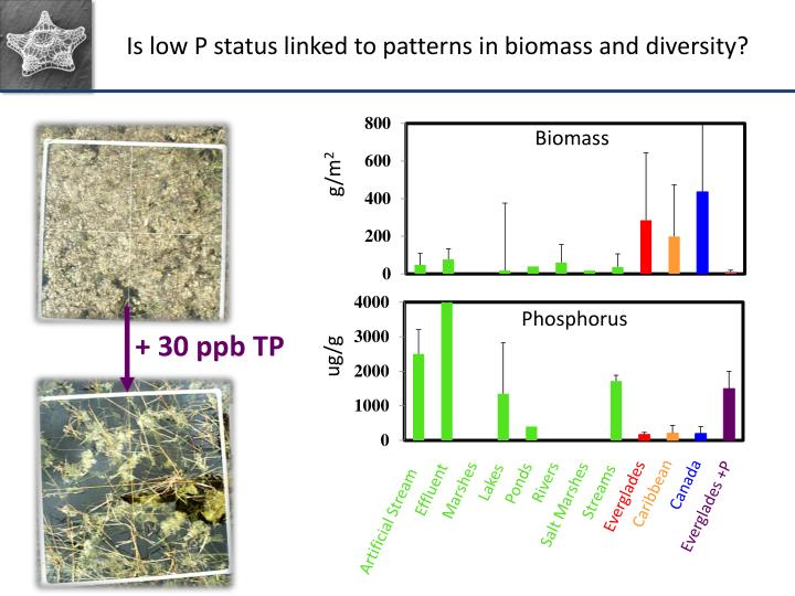 Is low P status linked to patterns in biomass and diversity?