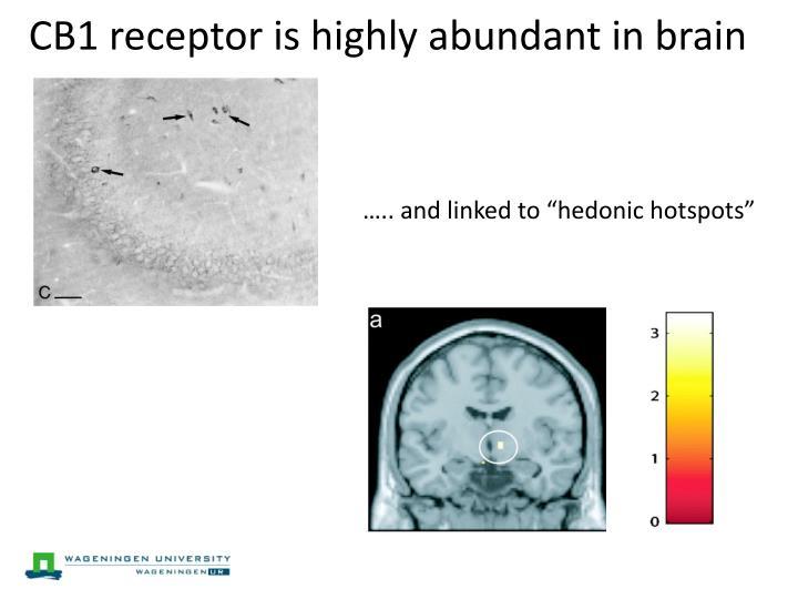 CB1 receptor is highly abundant in brain