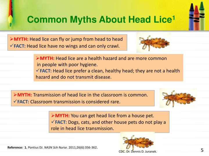 Common Myths About Head Lice