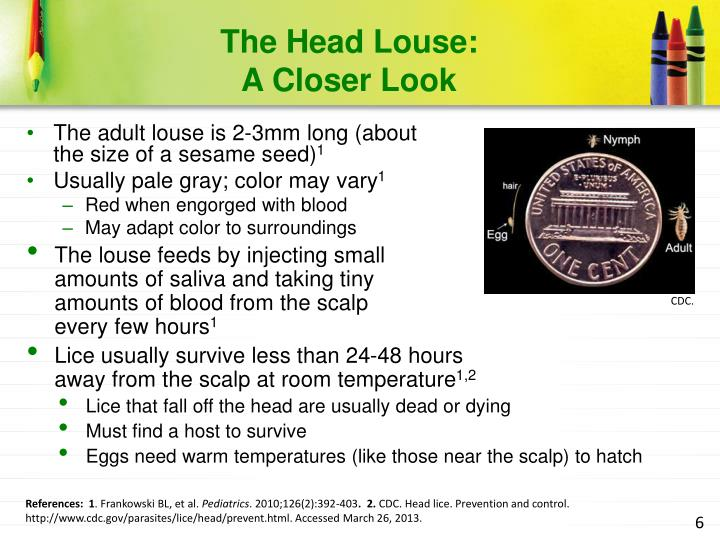 The Head Louse: