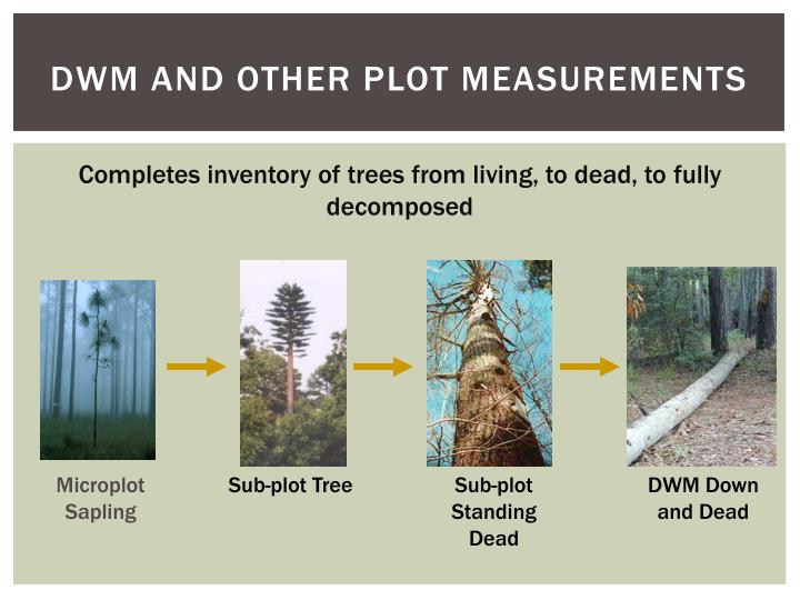 DWM and Other Plot Measurements