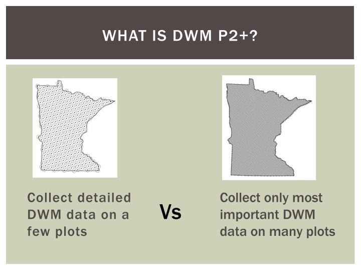 What is DWM P2+?