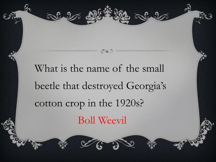 What is the name of the small beetle that destroyed Georgia's cotton crop in the 1920s