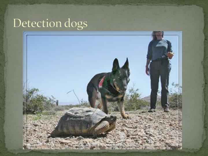 Detection dogs