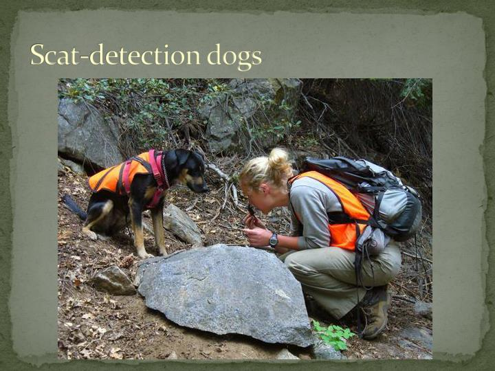 Scat-detection dogs
