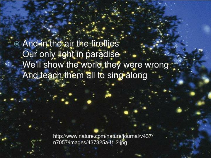 And in the air the fireflies