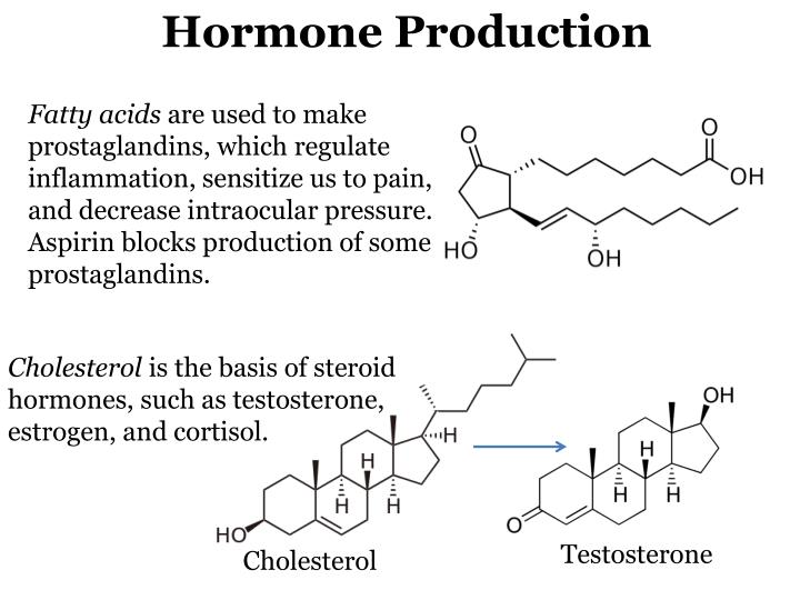 Hormone Production