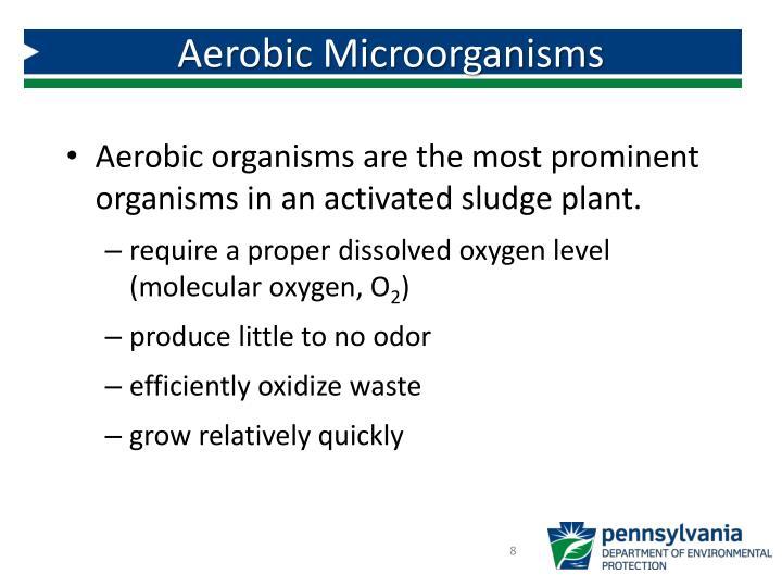Aerobic Microorganisms