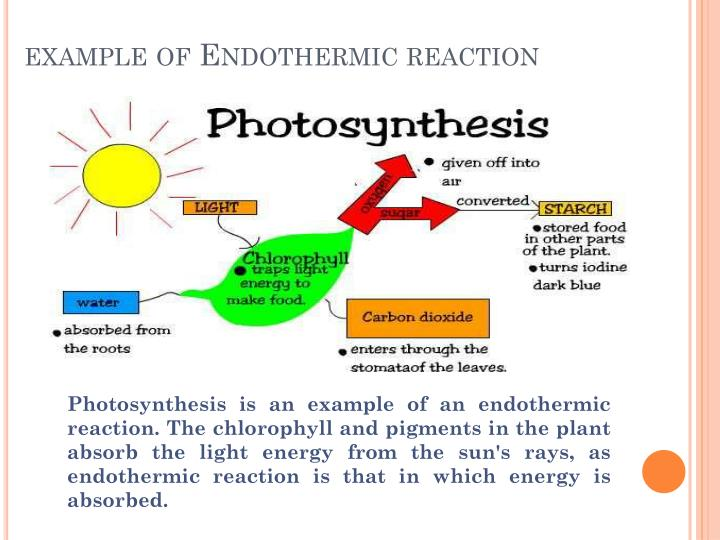Exothermic examples