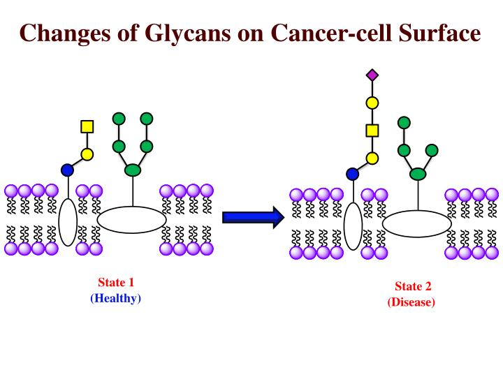 Changes of Glycans on Cancer-cell Surface