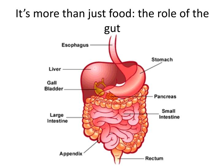 It's more than just food: the role of the gut