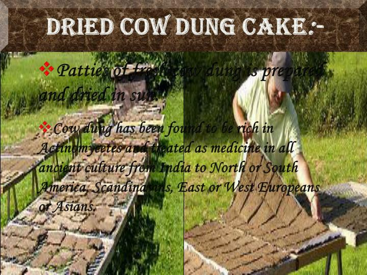 Patties of fresh cow dung is prepared and dried in sun.