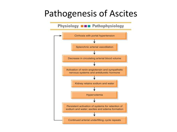 Pathogenesis of Ascites