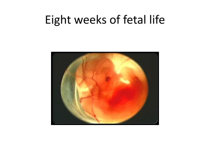 Eight weeks of fetal life