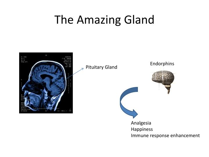 The Amazing Gland