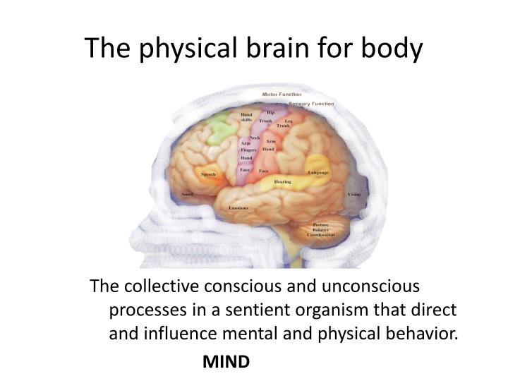 The physical brain for body