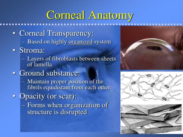 Corneal Anatomy