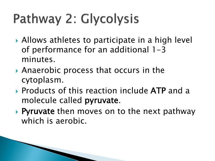 Pathway 2: