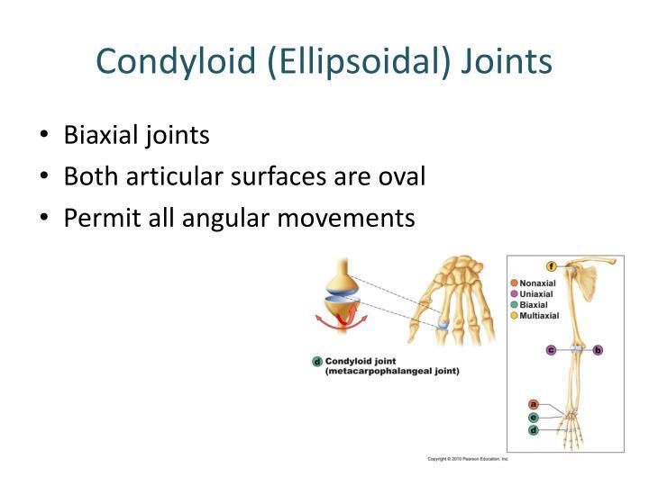 Condyloid