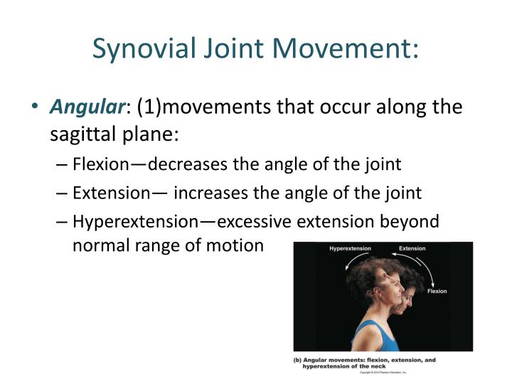 Synovial Joint Movement