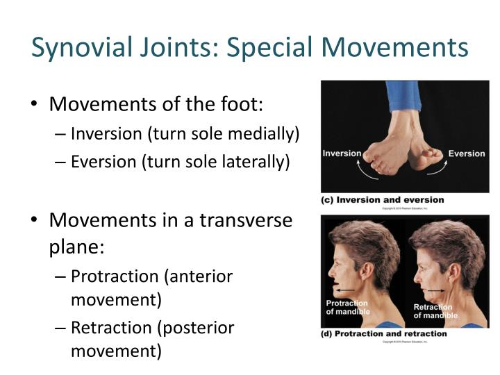 Synovial Joints: Special Movements