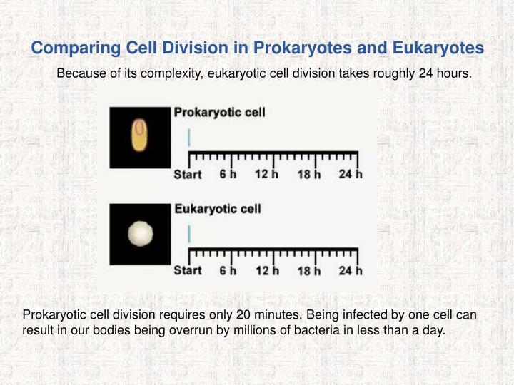Comparing Cell Division in Prokaryotes and Eukaryotes