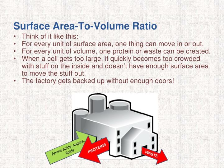 Surface Area-To-Volume Ratio