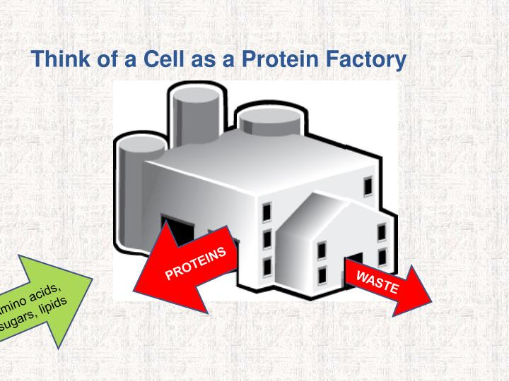 Think of a Cell as a Protein Factory
