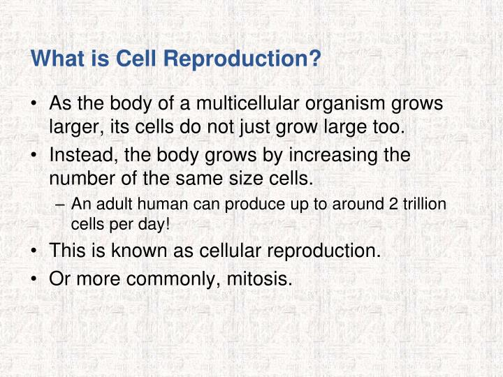 What is Cell Reproduction?