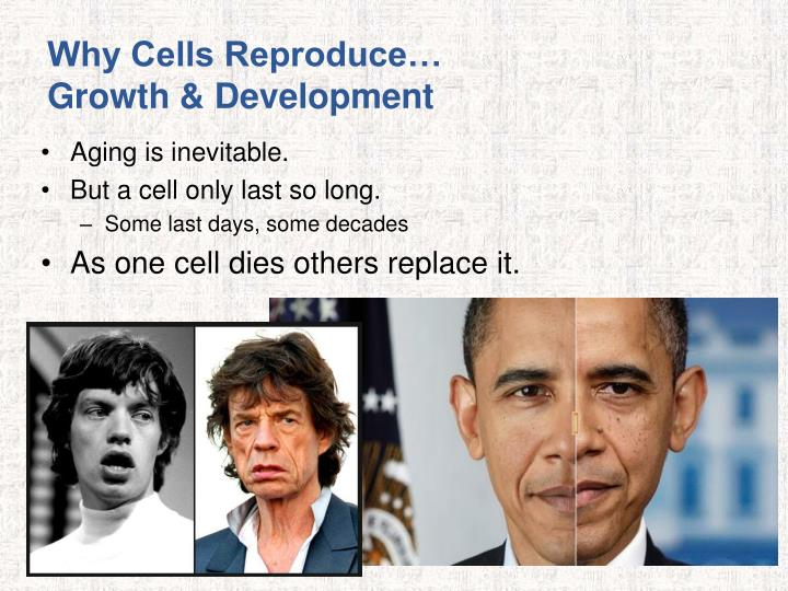 Why Cells Reproduce…