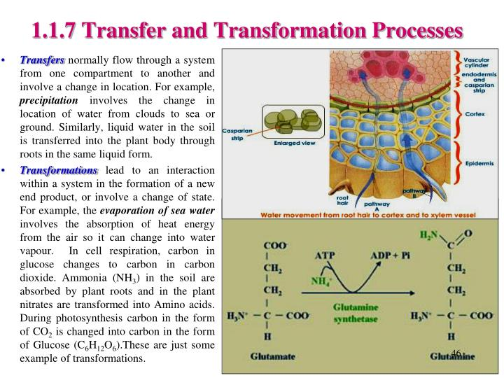 1.1.7 Transfer and Transformation Processes