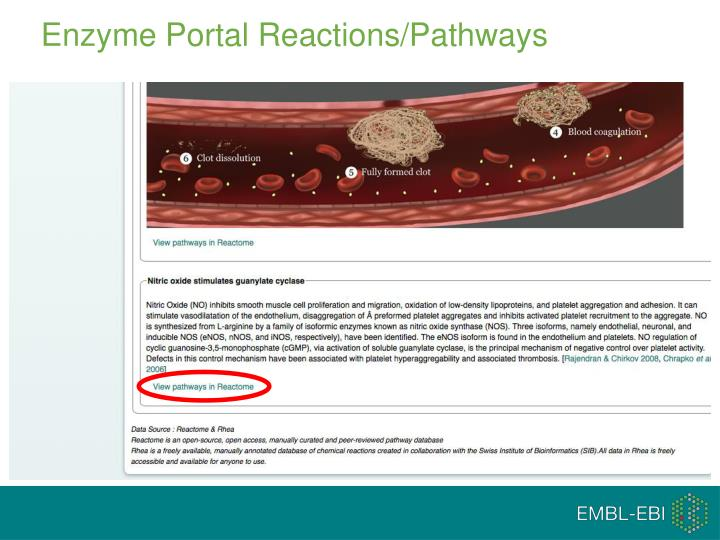 Enzyme Portal Reactions/Pathways